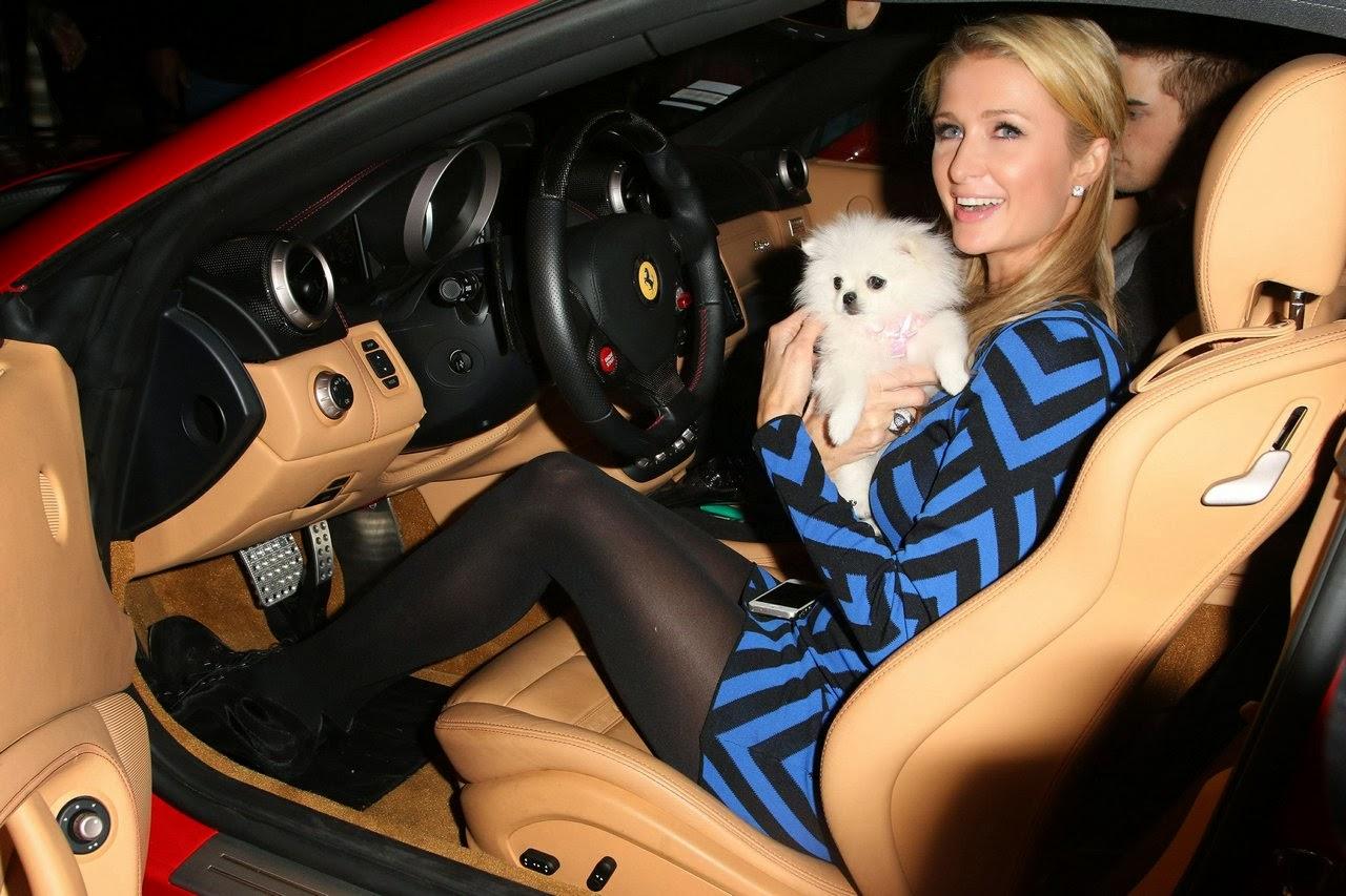 10 Facts about Pomeranians